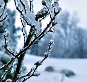 Чого очікувати закарпатцям від погоди у середу, 20 грудня