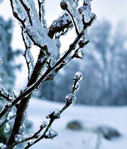 Чого очікувати закарпатцям від погоди у понеділок, 15 січня