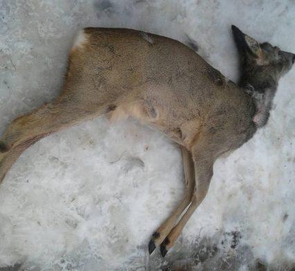 Поліція розслідує факт незаконного полювання на Іршавщині