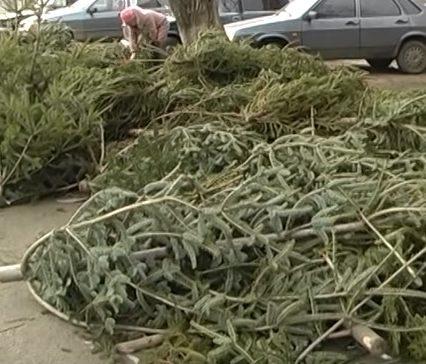 Вчора за гроші, сьогодні за безцінь- в Ужгороді на торгових майданчиках- сотні кинутих ялинок