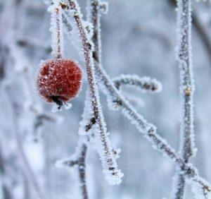 Найближчі 7 днів на Закарпатті будуть холодними (ВІДЕО)