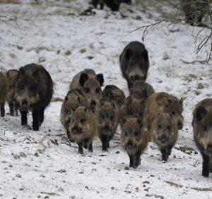 Правила підгодівлі диких тварин від ужгородських єгерів (ВІДЕО)