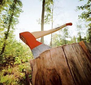 На Воловеччині поліція перевіряє інформацію про рубку деревини і порушення природоохоронного режиму