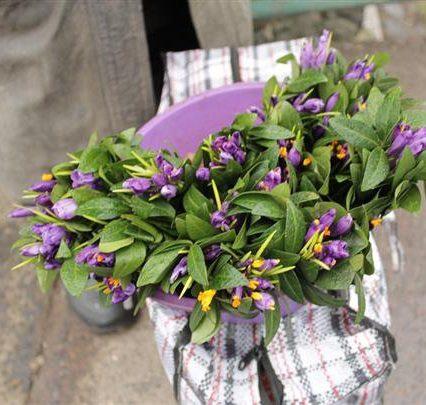 В Ужгороді почали продавати перші весняні квіти (ВІДЕО)