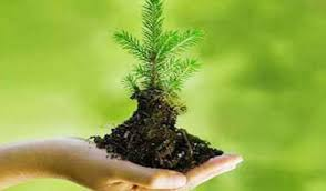 У Рахівському районі буде висаджено понад 2200 тисяч молодих дерев