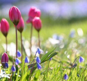 Чого очікувати закарпатцям від погоди у середу, 14 березня