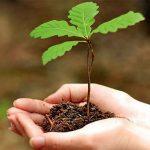 Посади своє дерево в рамках акції Майбутнє лісу у_твоїх руках на Закарпатті