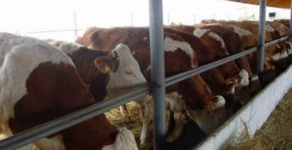 Возведение комплексов для развития животноводства