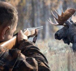 1 квітня на Закарпатті стартує «сезон тиші» для диких тварин