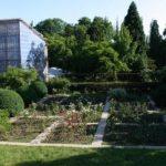Чому Ботанічний сад в Ужгороді працює лише в будні дні