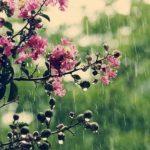 Прогноз погоди на тиждень (відео)