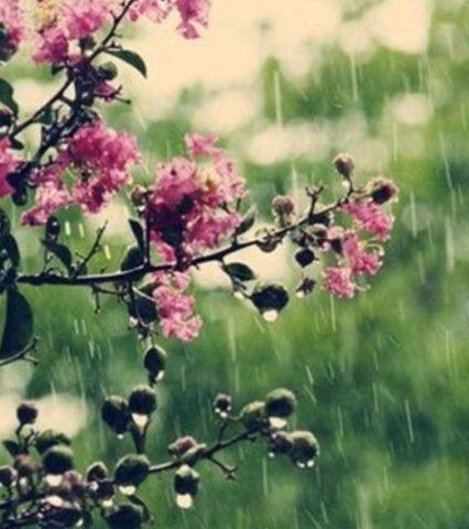 Чого очікувати закарпатцям від погоди у понеділок, 16 липня