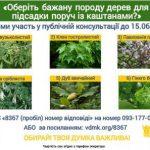 На Київські набережній Ужгорода каштани замінять гінкго білоба?