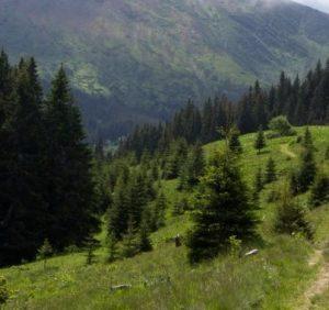 Упродовж доби гірські рятувальники Закарпаття двічі надавали допомогу потерпілим