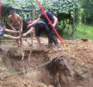 На Виноградівщині рятувальники витягли коня з трьохметрової ями (фото)