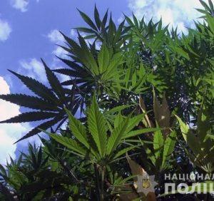 На Закарпатті поліцейські виявили сховок наркотичних речовин на 39 мільйонів гривень (відео)