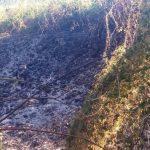 35 пожеж в екосистемах та загибель людини на одній з них – трагічний підсумок вихідних
