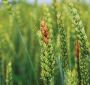 Фунгициды против болезней растений
