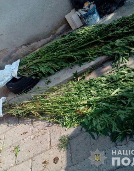 Мукачівські поліцейські на вирощуванні коноплі викрили місцевого мешканця