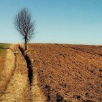 В Ужгородському районі безкоштовно роздали землю для потенційної електростанції. Бездонне джерело корупції