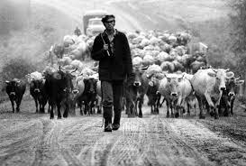 На Закарпатті пастух не догледів худобу і отримав смертельний удар