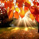 Чого очікувати закарпатцям від погоди у вівторок, 16 жовтня