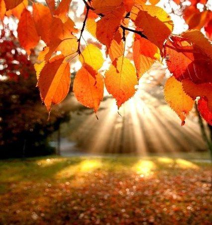 Чого очікувати закарпатцям від погоди у понеділок, 18 листопада