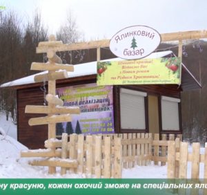 На Воловеччині стартував продаж новорічних ялинок (ВІДЕО)