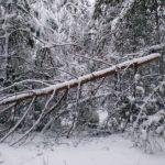 Деревопад на Закарпатті: рятувальники ліквідовували наслідки