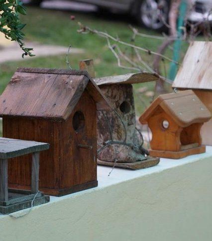 """На Закарпатті стартувала акція """"Нагодуй птахів взимку"""" (відео)"""