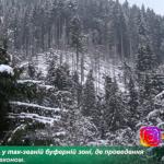Лісівники Рахівщини розчищають наслідки нищівних вітровалів (ВІДЕО)