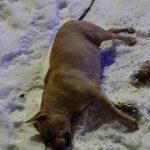 В Ужгородській міськраді відхрестилися від електропроводу, що вбив на вулиці собаку (відео)