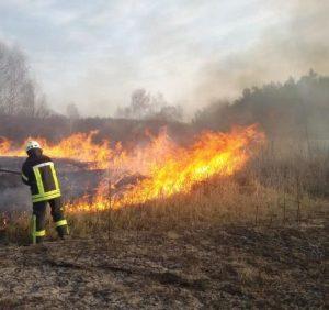 """Небезпечне """"вогняне прибирання"""" триває: на Закарпатті масово спалюють сухостій"""