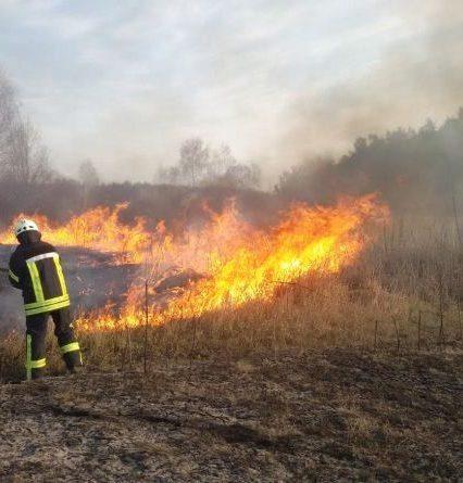 Закарпатцям коронавірусу замало – підпалили траву, а з нею і ліс (фото, відео)