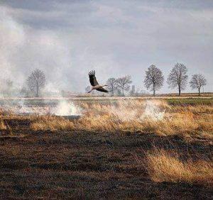 Трава горить – закарпатські рятувальники гасять. Однак всього цього могло й не бути
