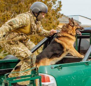 Закарпаття контрабандне: до краю прибули резерви прикордонників, військової техніки і службові собаки