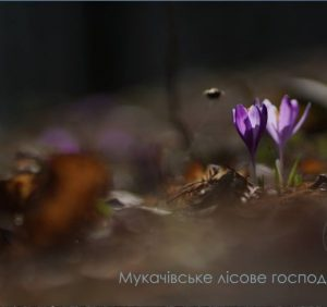 Лісівники Закарпаття показали квітку, яка цвіте навіть у Трансильванії (ВІДЕО)