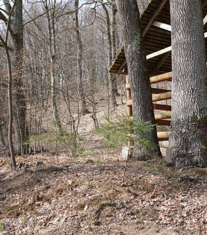 У «Дубках» лісівники висадили молоденькі смерічки