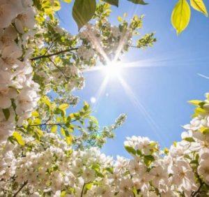 Чого очікувати закарпатцям від погоди у п'ятницю, 28 червня