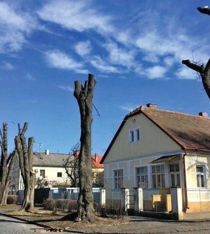 В Ужгороді подали петицію з вимогою зупинити знищення зелених насаджень – триває збір підписів