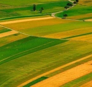 Земельний скандал – у селі Загаття на Іршавщині. Винуватять Держгеокадастр (відео)