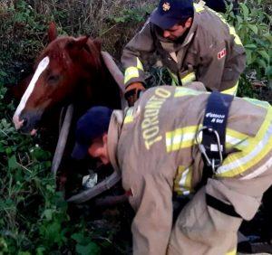 Рятувальники витягли коня, який потрапив до шахти комунікаційних мереж