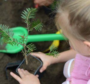 Лісівники Свалявщини вчать дітей піклуватися про флору і фауну