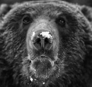 На Виноградівщині розпочався «перепис лісових мешканців»