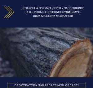 На Великоберезнянщині прокуратура скерувала до суду обвинувальні акти щодо незаконної порубки дерев у заповіднику
