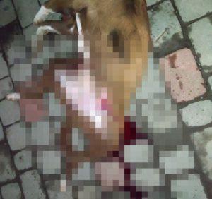 В Ужгороді посеред вулиці застрелили собаку? (фото 18 +)
