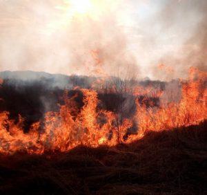 На Закарпатті вже вдруге влаштували підпал на території Долини нарцисів (фото)
