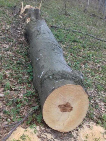 На Закарпатті прикордонники виявили незаконну вирубку лісу (фото)