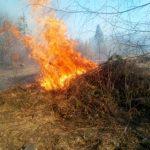 Закарпатці продовжують випалювати все живе навколо себе (фото)