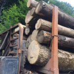 На Рахівщині правоохоронці встановлюють походження деревини, яку перевозили на підставі підроблених документів